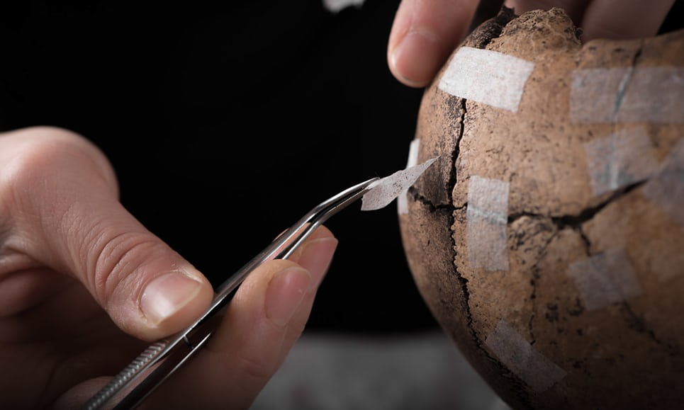 An archaeologist piecing together one of the skulls found at Sandby Borg, on the shore of Öland Island, off the south-east coast of Sweden. Photograph: Daniel Lindskog